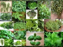 αρωματικά φυτά-aromatika fita